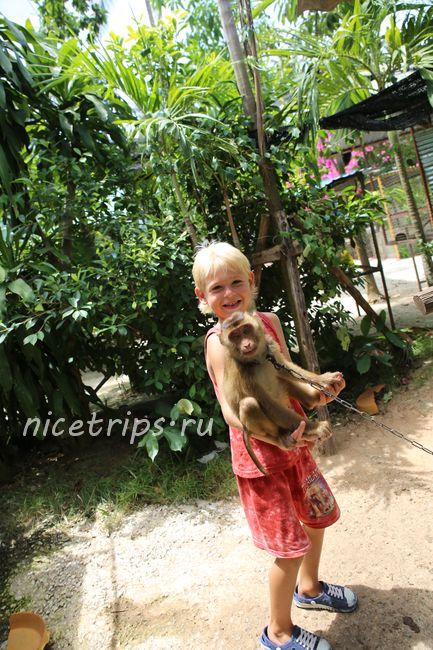 Контактный зоопарк с обезьянами на Самуи
