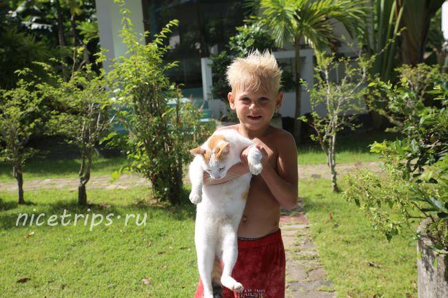ребенок ухаживает за кошками