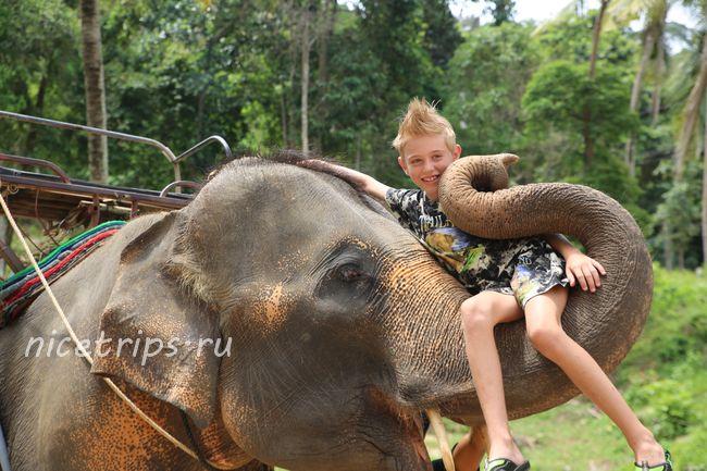 фото на хоботе слона
