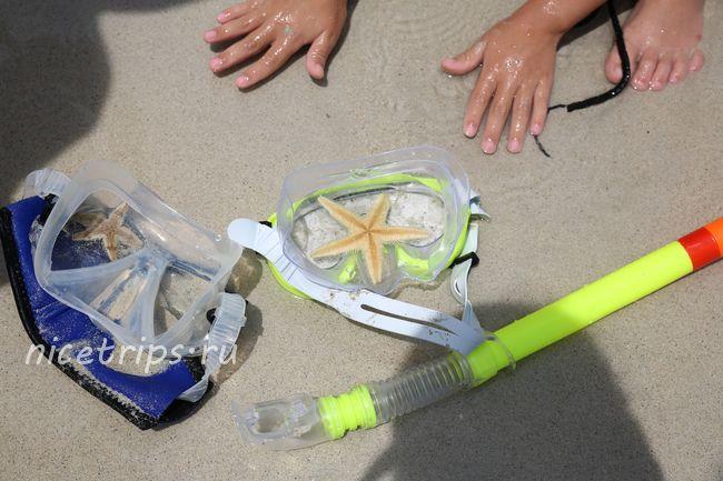 исследуем морских жителей