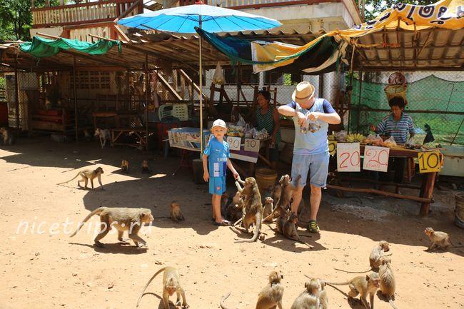 кормление обезьян