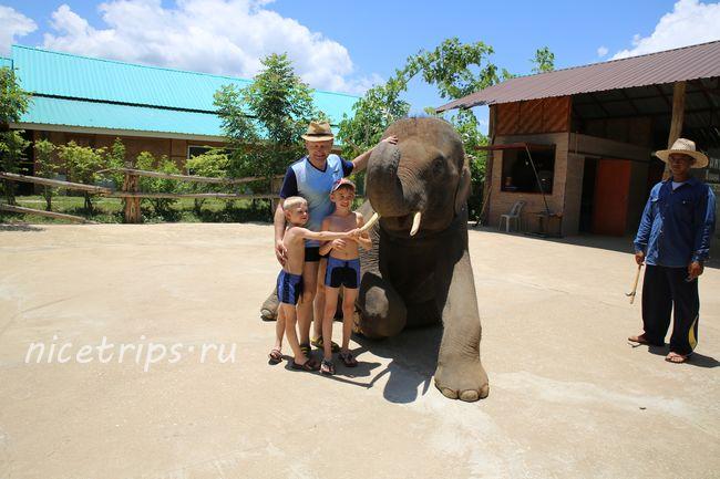 Фото со слоном