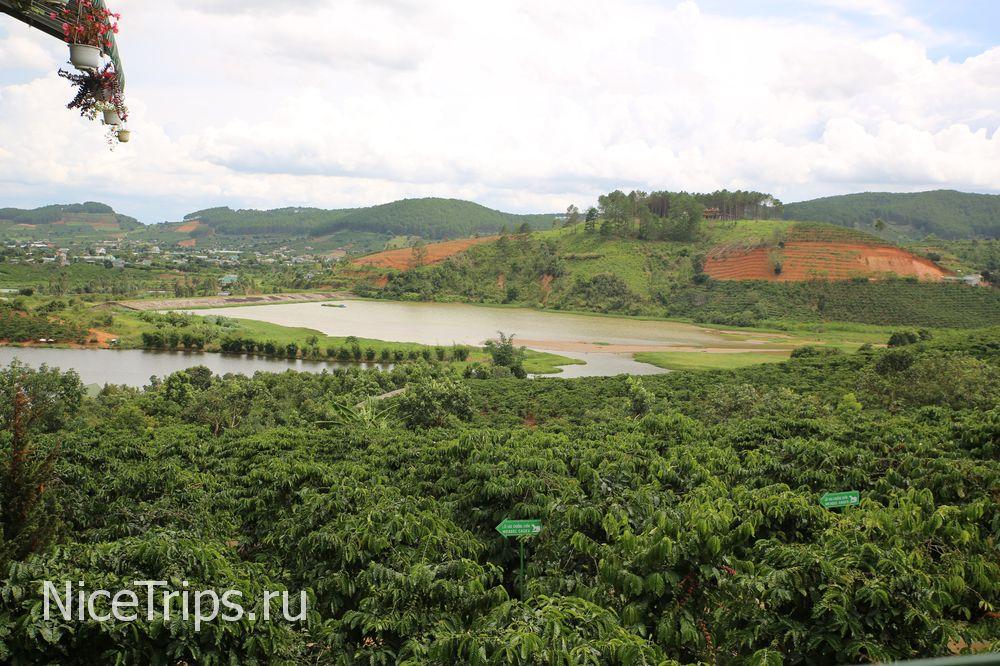Кофейная плантация Вьетнам