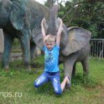 Слоники на территории