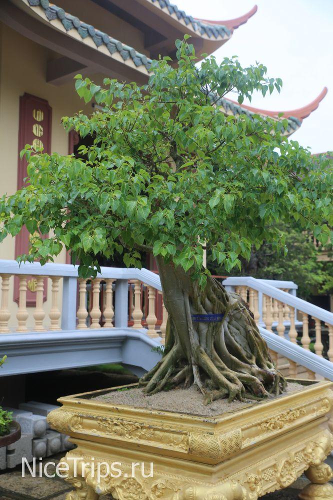 Дерево бонсай на территории