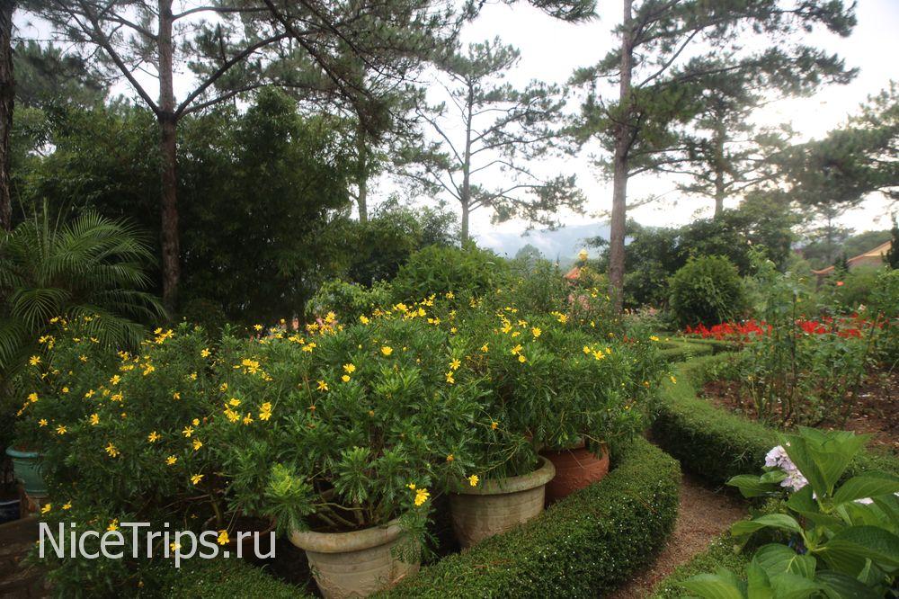 Цветы на территории