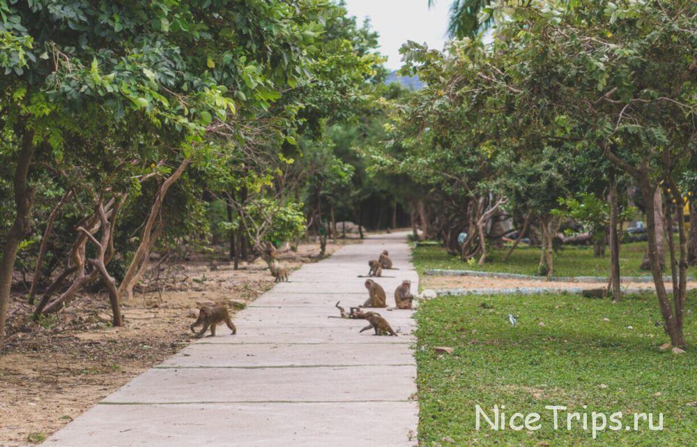 обезьяны на острове Hon Lao