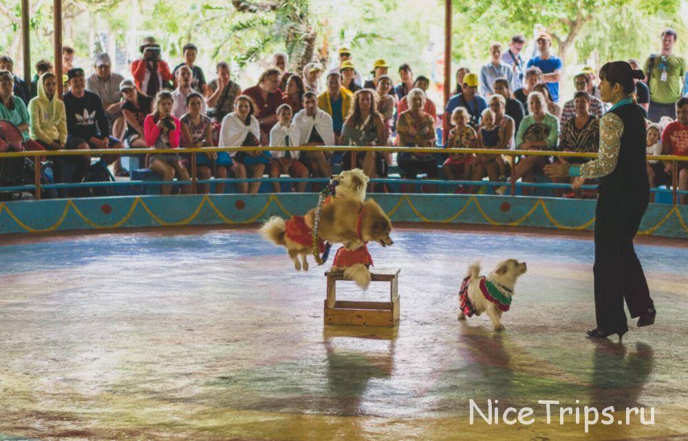 выступление обезьян на острове обезьяны на острове Hon Lao