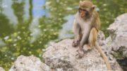 Остров Обезьян в Нячанге — Фото отзыв самостоятельных туристов
