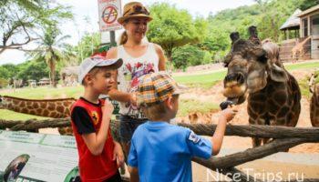 Зоопарк Кхао Кхео из Паттайи — все, что надо знать перед посещением