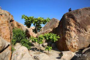 сад камней в Нячанге