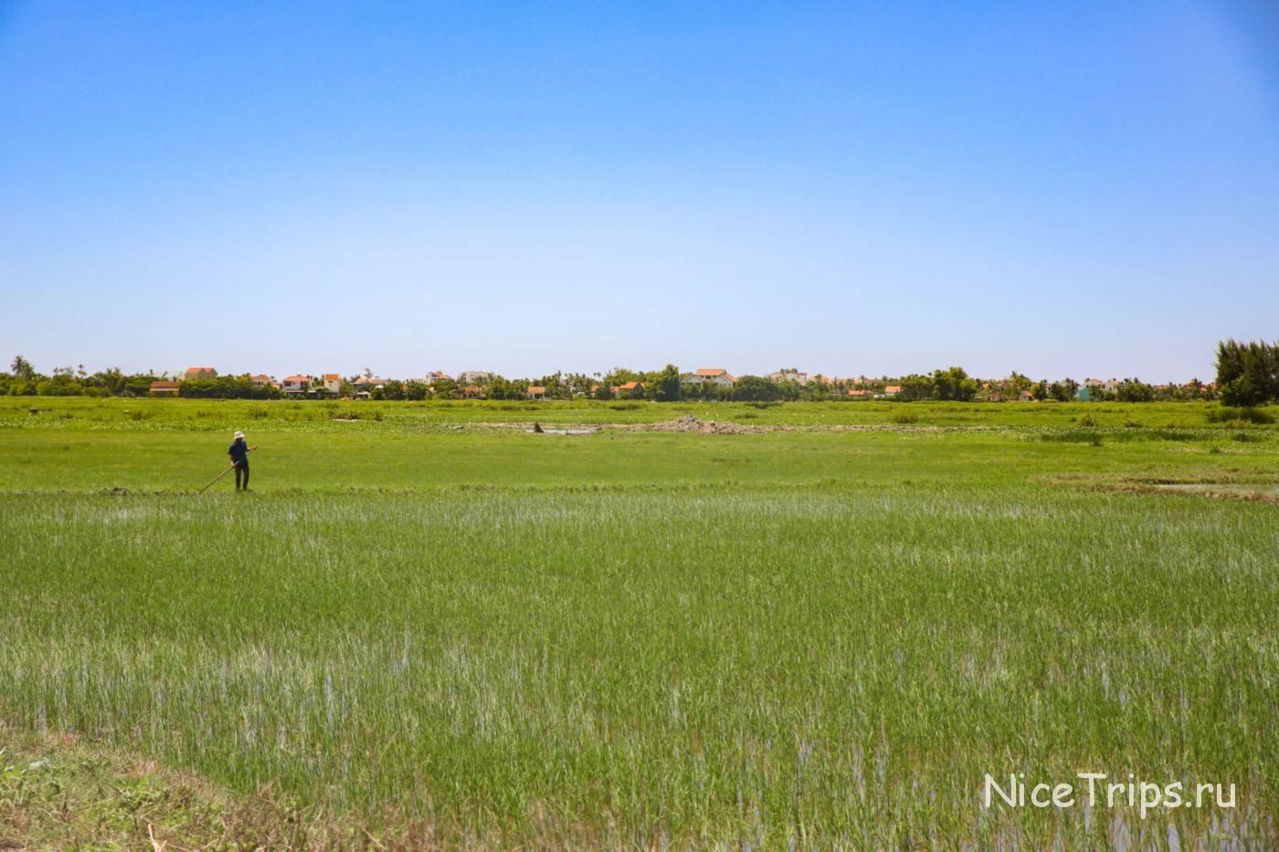 рисовые поля в Хойане