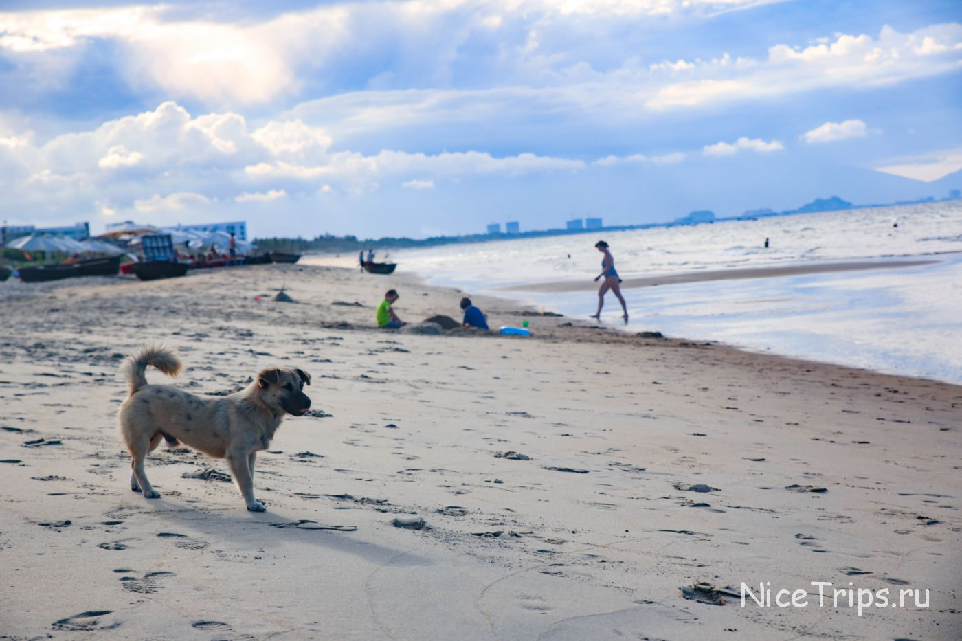 собака на пляже Хойана
