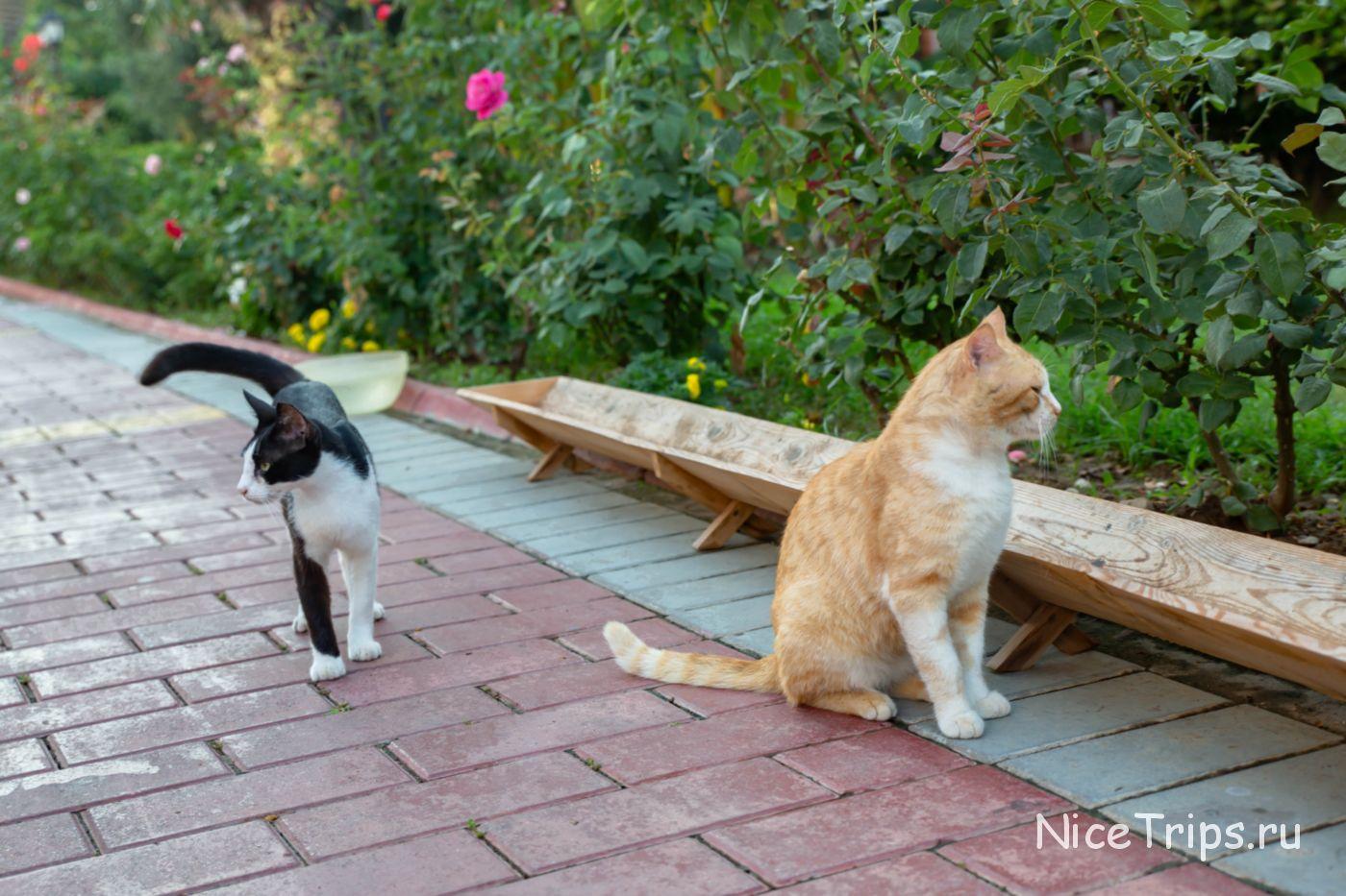 Коты на территории отеля